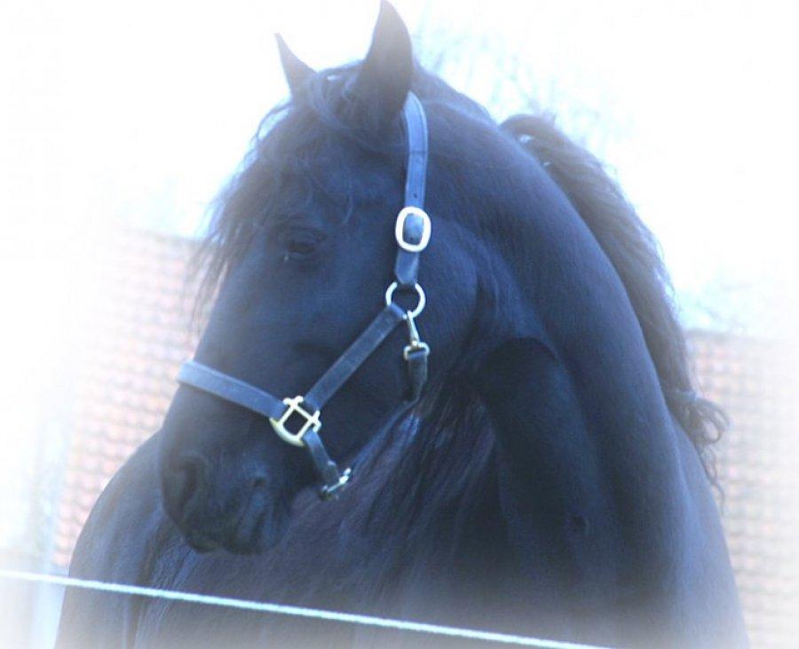 hest-01.jpg