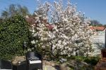 magnolie_crw_7828_r_w.jpg